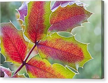Little Bit Of Autumn Canvas Print