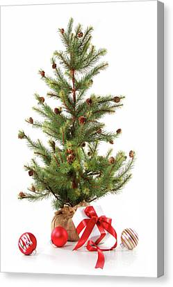 Little Christmas Tree With Red Ribboned Gifts On White  Canvas Print by Sandra Cunningham