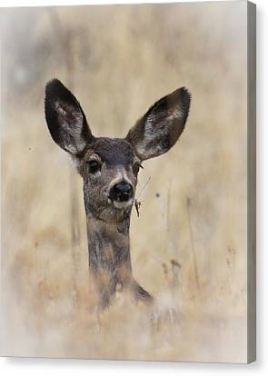 Canvas Print featuring the photograph Little Fawn by Steve McKinzie