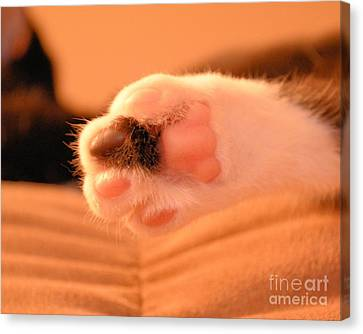 Canvas Print featuring the photograph Little Foot by Melissa Goodrich
