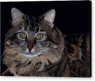 Little Girl - Maine Coon Cat Painting Canvas Print by Patricia Barmatz