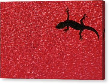 Little Lizard Canvas Print by Hidayat Mercado