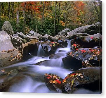 Great Falls Park Canvas Print - Little Pigeon River Cascading Among by Tim Fitzharris