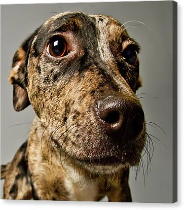 Little Pup Canvas Print by Square Dog Photography