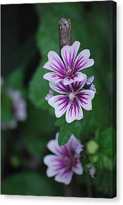 Canvas Print featuring the photograph Little Purple Flowers by Amee Cave