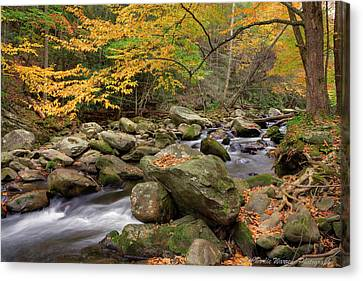 Little River I Canvas Print by Charles Warren