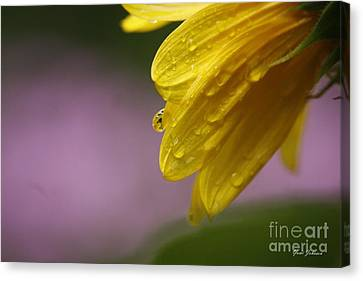 Canvas Print featuring the photograph Little Sunflower by Yumi Johnson