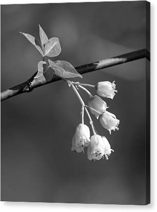 Canvas Print featuring the photograph Little White Bells by David Lester