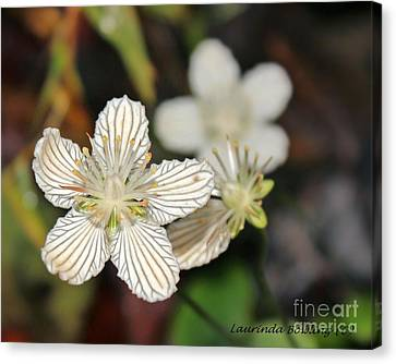 Little Wildflower Canvas Print by Laurinda Bowling