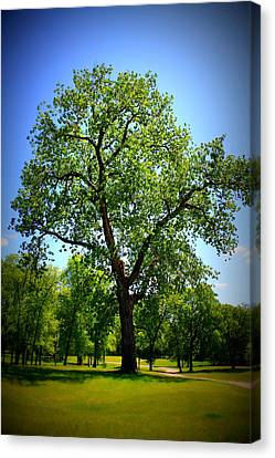 Old Green Tree Canvas Print