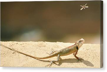 Lizards Canvas Print by Shahzeb Nasir