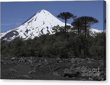 Llaima Volcano, Araucania Region, Chile Canvas Print by Martin Rietze