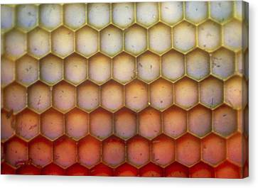 Dragonfly Eyes Canvas Print - Lm Of The Facets Of A Dragonfly's Compound Eye by John Walsh
