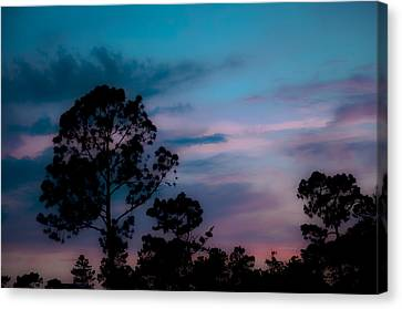 Loblelly Pine Silhouette Canvas Print by DigiArt Diaries by Vicky B Fuller