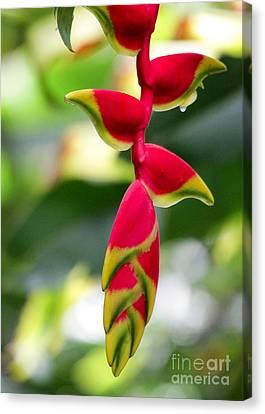 Florida Flowers Canvas Print - Lobster Claws by Sabrina L Ryan