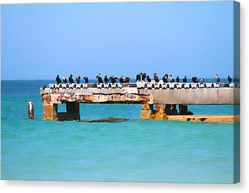 Double-crested Cormorant Canvas Print - Local Hangout by Betsy Knapp