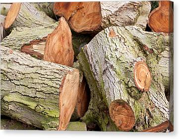 Woodpile Canvas Print - Logs by Tom Gowanlock