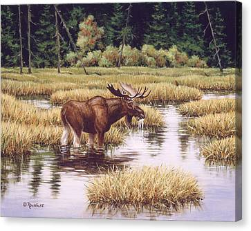 Forest Canvas Print - Lone Bull by Richard De Wolfe