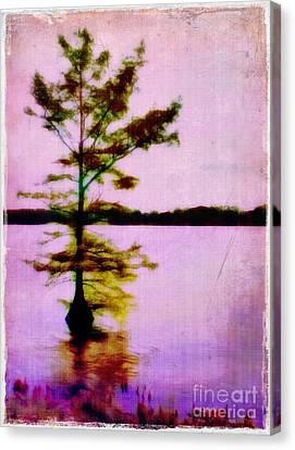 Lone Cypress Canvas Print by Judi Bagwell
