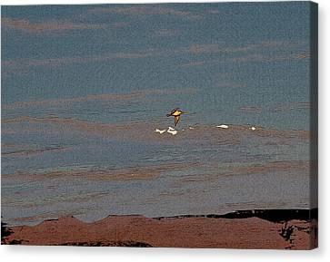 Lone Gull  Canvas Print by Gilbert Artiaga