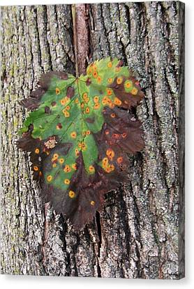 Lone Leaf-2 Canvas Print by Todd Sherlock