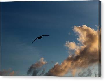 Lone Seagull Canvas Print