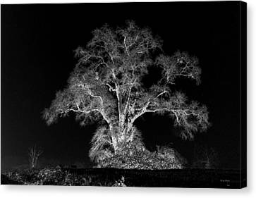 Canvas Print featuring the photograph Lone Tree 002 by George Bostian