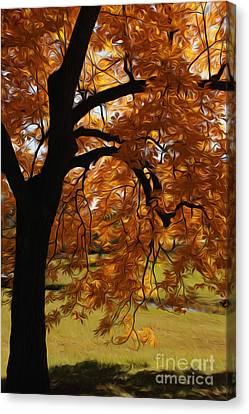 Canvas Print featuring the photograph Lone Tree by Anne Raczkowski