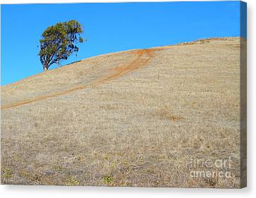 Lone Tree At Coyote Hills California . 7d10906 Canvas Print by Wingsdomain Art and Photography