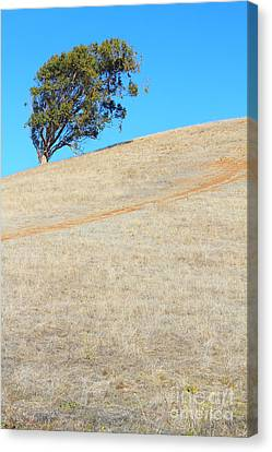 Lone Tree At Coyote Hills California . 7d10908 Canvas Print by Wingsdomain Art and Photography