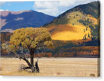 Canvas Print featuring the photograph Lone Tree by Jim Garrison
