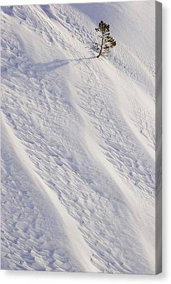 Lone Tree On Mount Hood In Winter Mount Canvas Print by Craig Tuttle
