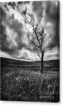 Lone Tree On The Ayrshire Moors Canvas Print by John Farnan