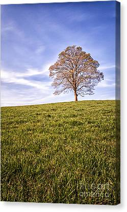 Lone Tree On The Hill Colour Canvas Print by John Farnan