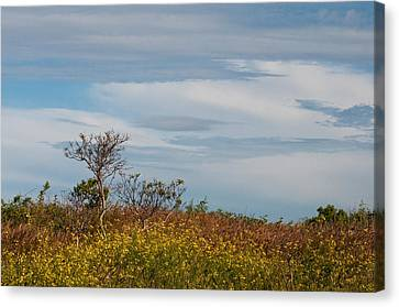 Canvas Print featuring the photograph Lone Tree On The Rhode Island Coast by Nancy De Flon
