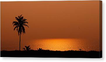 Lone Tree Silhouette During Sunset Canvas Print by Hegde Photos