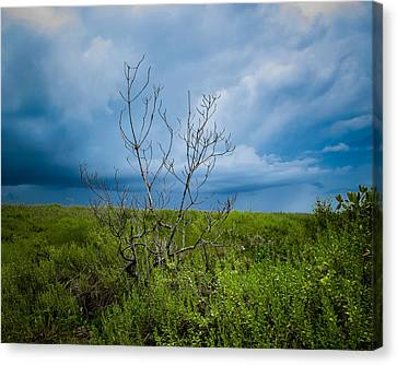 Lone Tree Canvas Print by VJ Musick