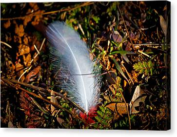 Lonely Feather Canvas Print by Doug Long