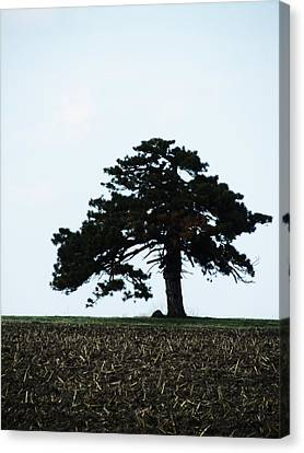 Lonely Tree #1 Canvas Print by Todd Sherlock
