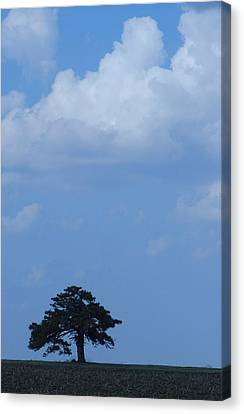 Lonely Tree #2 Canvas Print by Todd Sherlock