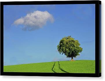 Lonely Tree Against Blue Sky Canvas Print by Ernie Watchorn