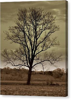 Lonely Tree Canvas Print by Marty Koch