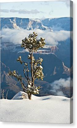 Lonely Tree Over The Grand Canyon Canvas Print