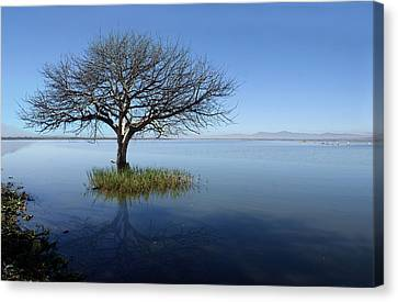 Lonely Tree Canvas Print by Saul Landell / Mex