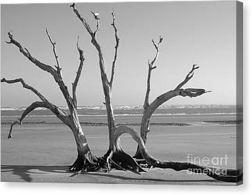 Lonesome Tree Canvas Print by Melody Jones