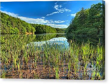 Long Branch Lake Marsh Canvas Print by Adam Jewell
