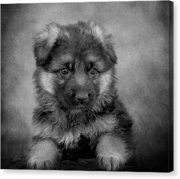 Long Coated Puppy II Canvas Print by Sandy Keeton