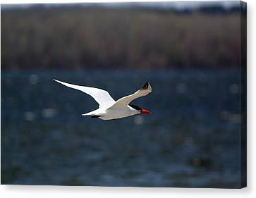 Long Haul Flight Canvas Print by Ramabhadran Thirupattur