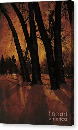 Long Shadows Canvas Print by Alyce Taylor