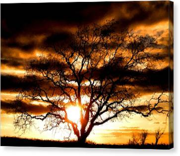Lonley Tree Canvas Print by Karen Scovill